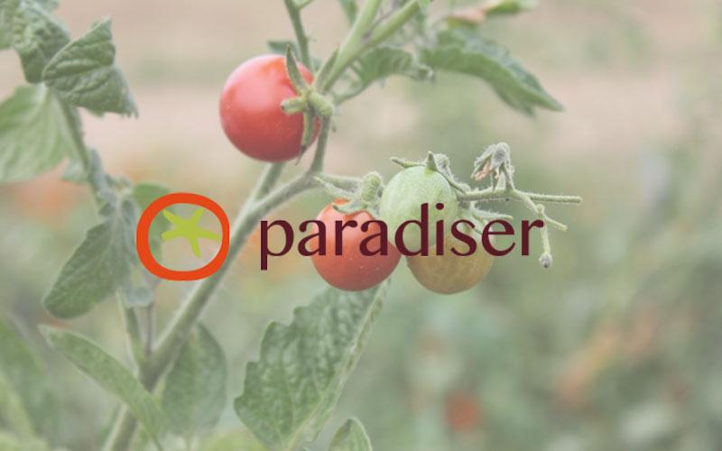 projekt-paradiser